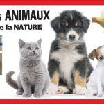 Anîmox – 17 ème édition du salon des animaux et de la nature 2020