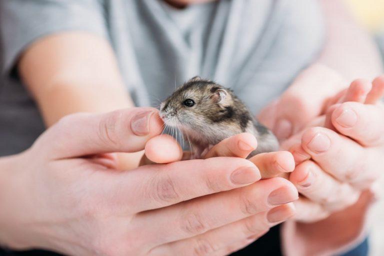 attraper-un-hamster-hygiène