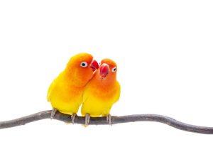 inseparable-animaux-domestiques