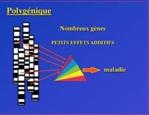 polygenique