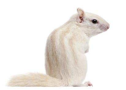 ecureuil-de-coree-quiz