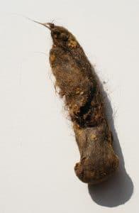 trichobézoard