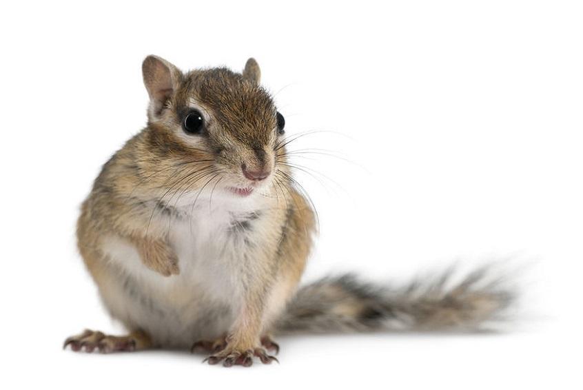 ecureuil-de-coree-carousel